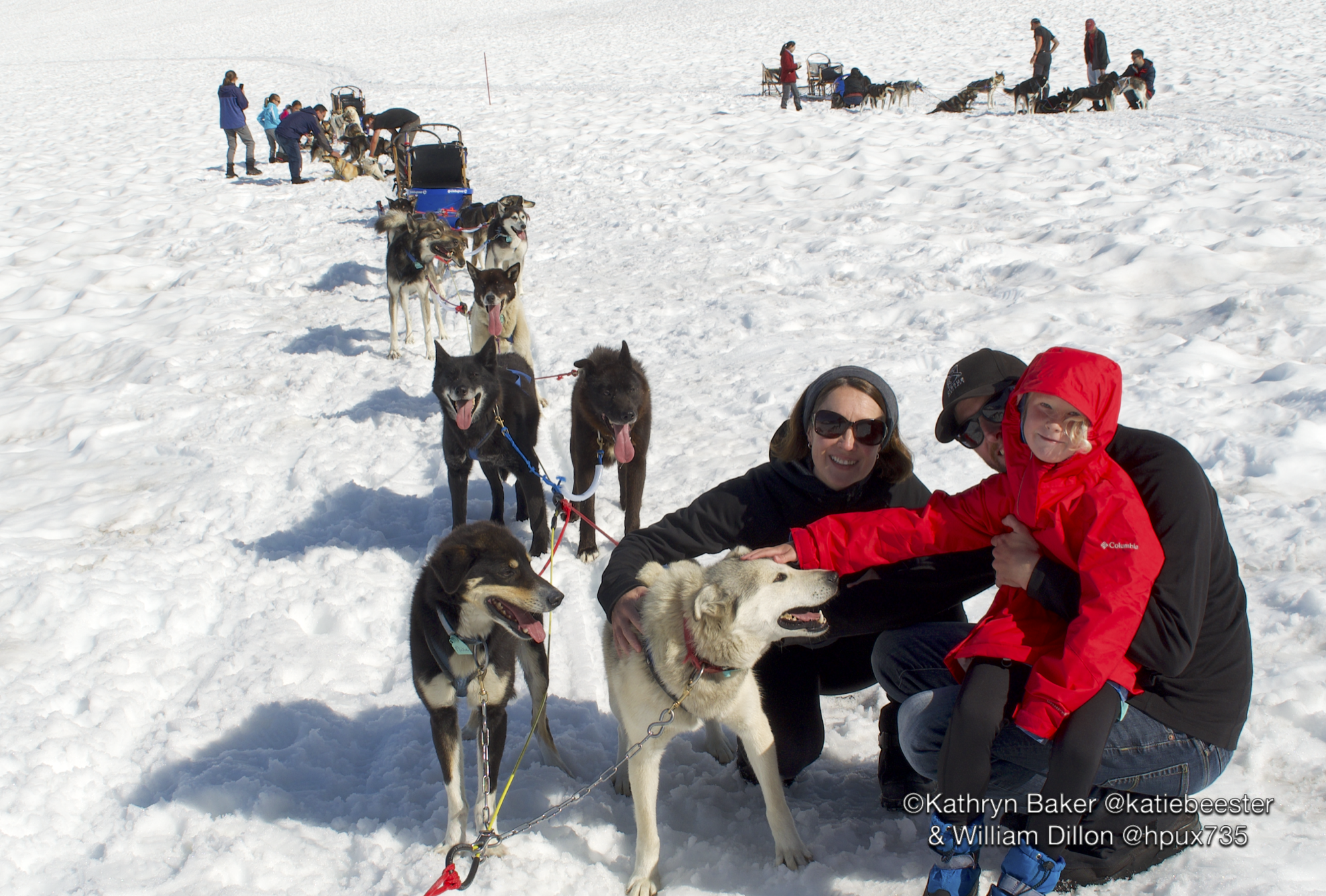 Petting Sled-dogs